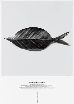 Leaffish #fish #photography #poster #leaf