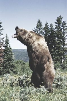 oh #grizzly bear #scary as fuck
