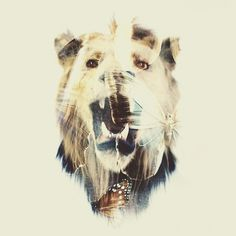 AA_SCHMALLER.jpg (JPEG Imagen, 748x748 pixels) #lion #design #mountford #dan #exposure #double