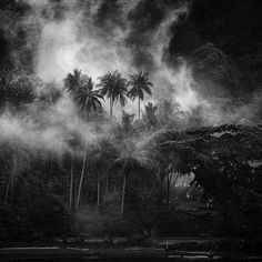 Black & White Photography #palm #white #black #mist #photography #and #forest #trees #jungle