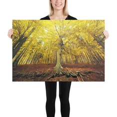 Radiant autumn forest photo poster print yellow trees 24×36 inches
