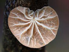 World Of Australian Mushrooms Photography by Steve Axford #nature photography #Mushroom photos #macro photography
