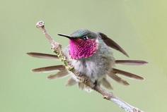 #planetbirds: Incredible Bird Photography by Lindolfo Vieira Souto