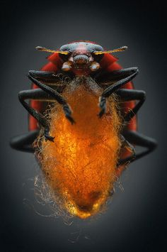 Mindsuckers - Photo Gallery - National Geographic Magazine #close #beetle #insect #photography #up #nature #macro #beauty