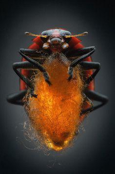 Mindsuckers - Photo Gallery - National Geographic Magazine
