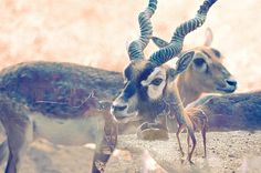 Inkip » Archive » Realize #photography #sepia #antlers #inkip #martin epelde