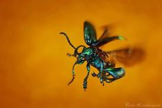 Wonderful Macro Photography of Insects by Roni Hendrawan #macro photography #insects photography