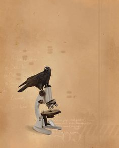 An Accident of Hope : Photo #corvid #design #bird #illustration #microscope #painting #crow #art #science #raven #intelligence