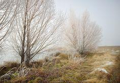 Frozen Trees New Zealand by Peter Clarke Photography Australia