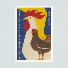 More hens in joint cooperative breeding. (Czechoslovakia)