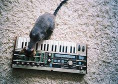FFFFOUND! | slyAPARTMENT #carpet #cat #keyboard