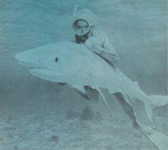 shark riding