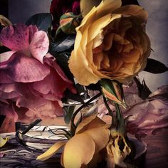 Flowers from Nick Knight's Instagram feed #composition #photography #soft #vintage #flowers