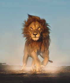 Unforgettable Portraits of Wild Animals by Shaaz Jung