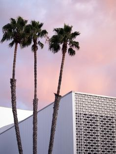 Photography #palm #sky #pink #photography #purple