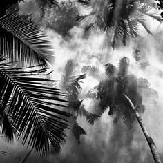 Black And White Nature Photography – Fubiz™ #photo