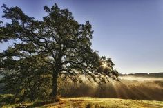 HDR by Chris Fisher | Professional Photography Blog #inspiration #photography #hdr