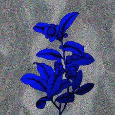 #friday #flower #series #01 —B.
