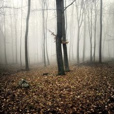 FFFFOUND! | a forest on the Behance Network #stone #tree #leaf #fog #autumn #naked