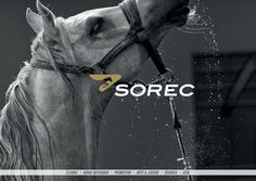 Sorec global Identity and branding #design #brand #identity #logo #sorec