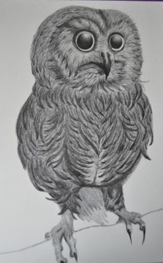 Ilustración on the Behance Network #illustration #owl