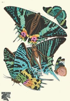 weetstraw.com - Insect Collages