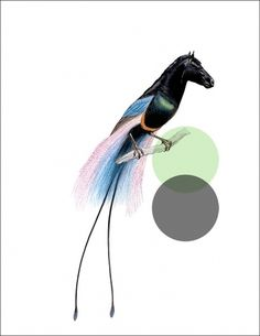 Odd Animals : - tor weeks - director of art #illustration #horse #branch #bird