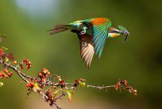 Bird Hunting #hunting #bird