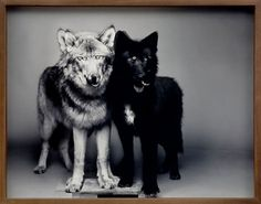 Dog 1 ☚☛ Dog 2 #photography #white #black #and