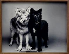 Dog 1 ☚☛ Dog 2 #photography #white #black #and