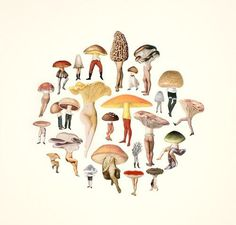 amy ross #illustration #creatures #mushroom #pixies