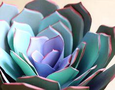 #paper #succulent #plant #green