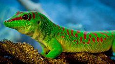 happy lizard #macro #photography #animal #lizard