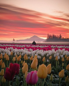 Jake Egbert Captures The Beauty at The Wooden Shoe Tulip Festival in Oregon