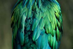Merde! - Photography (by rjswilson, via edgina) #photography #animals #bird #parrot #feathers