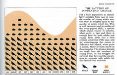 Bird population change. | Flickr: Intercambio de fotos #infographics