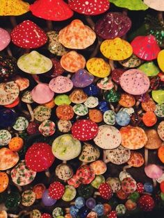 Colorful mushrooms #color #mushrooms