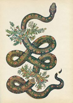 Snake 2013 by Katie Scott #katie #coiled #serpent #snake #illustration #reptile #art #scott #animal