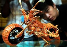 Lobster Bike » Design You Trust – Design and Beyond! #foods #photo #arts #bike #lobster