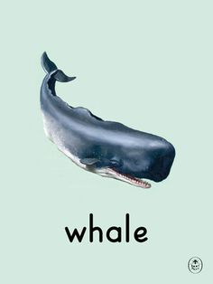 whale Art Print by Ladybird Books Easyart.com #print #design #retro #artprints #vintage #art #bookcover