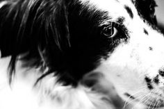 Jerome. #white #black #photography #and #dog