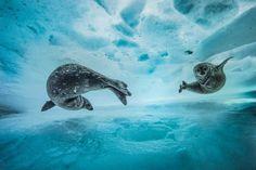 Swim gym by Laurent Ballesta