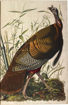 The birds of America, el libro más caro de la historia