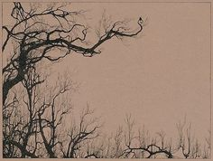 FFFFOUND! | Tumblr #tree