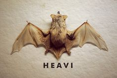 http://www.gtez.tumblr.com/ #photo #bat #animal #heavi