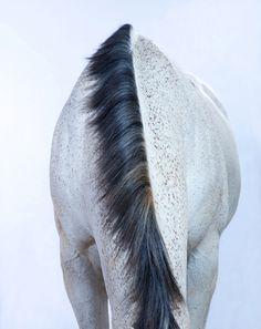 Merde! : Photo #photo #horse