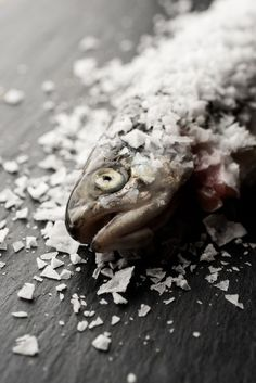 From the photo essay Salt preservation by Martin Kaufmann From Cereal Magazine Volume 2 #fish #salt