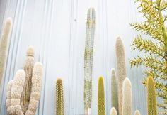 FFFFOUND! | Frame Story #frame #cactus #story #plant