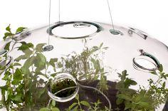 CJWHO ™ (A Suspended Glass Greenhouse Lamp 'glasshouse'...)
