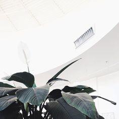 Likes | Tumblr #nature #plant